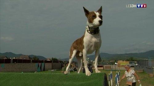 Animaux : un parc de loisirs pour chiens en Alsace