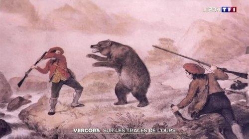 Vercors : sur les traces de l'ours disparu