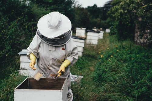 How hemp could save bees