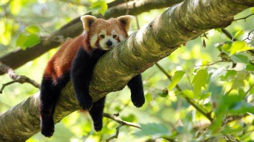 Le zoo de Lille rouvre ses portes aux visiteurs dès le 19/05 aussi