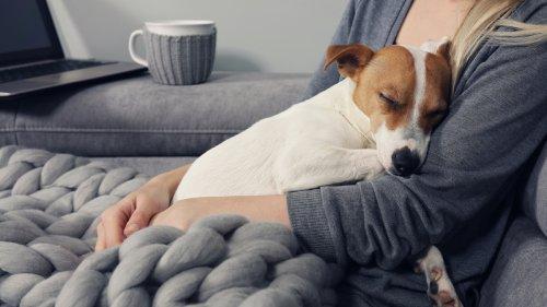 350 animaux à adopter pour les sauver de l'euthanasie