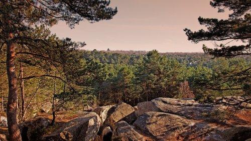Un week-end de rêve en plein cœur de Fontainebleau