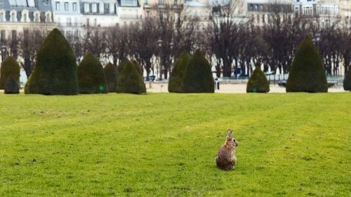 Les militaires des Invalides ne pourront (enfin) plus tuer les lapins