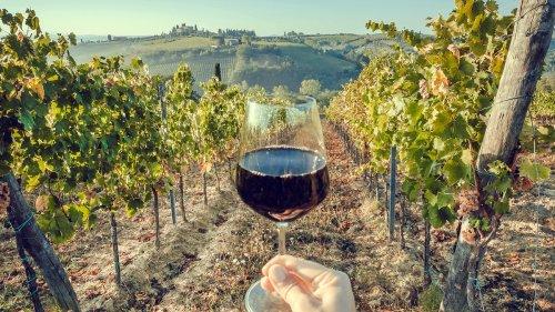 Job de rêve : gagner 8 500 euros par mois pour tester du vin et vivre dans un vignoble