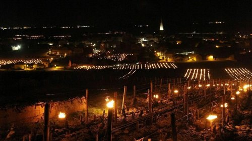 [En images] Contre le gel, les viticulteurs allument des feux dans leurs vignes