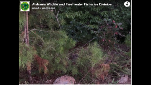 It's large and venomous. Can you spot snake hiding in this Alabama forest photo?