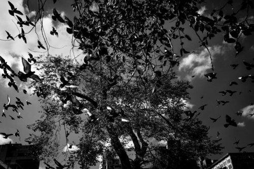 Joseph Michael Lopez // Stories // Leica Q2 Monochrom // Leica Q // Photography - Leica Camera AG