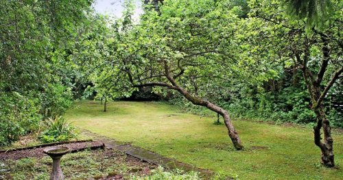 The Leicester four bed for sale with its own orchard