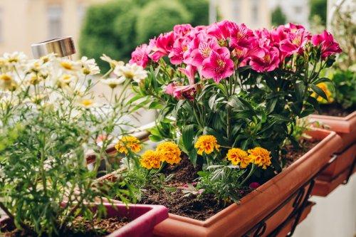 Les plantes et les fleurs à avoir absolument pour égayer un balcon ombragé