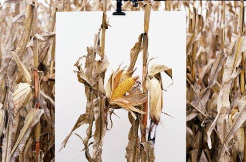 Monsanto : une enquête photographique par Mathieu Asselin | Lense