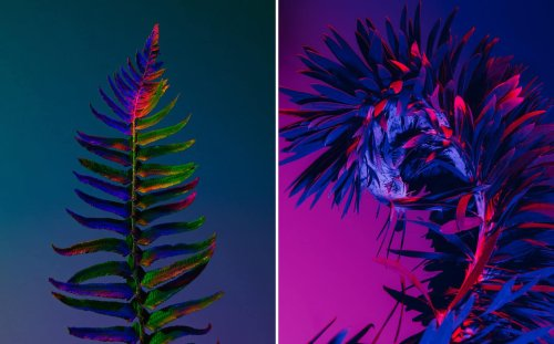 Botaniques d'un autre monde par Lindsey Rickert | Lense