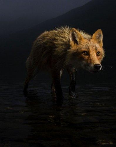 Les lauréats 2021 du prix Wildlife - Les Echos Planète