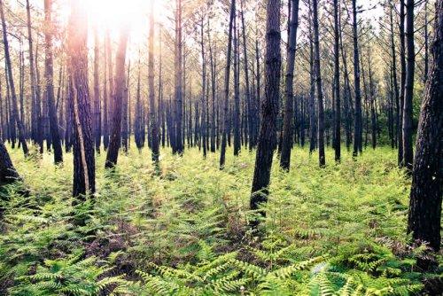 Les arbres ne montent pas jusqu'au ciel, cela vaut aussi pour l'acteur de la filière bois Moulinvest