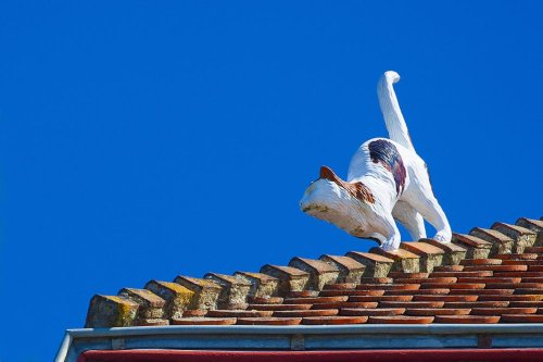 Un homme coincé sur un toit à Uccle: il cherchait son chat
