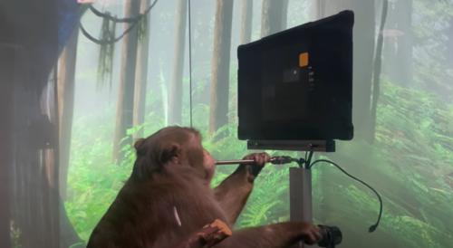 Un singe joue à un jeu vidéo grâce un implant cérébral créé par la start-up d'Elon Musk (vidéo)