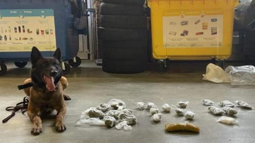 Matonge: Nixon, un chien policier, découvre de la cocaïne et du cannabis dans un parking