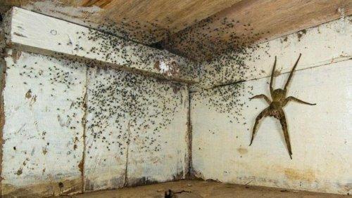 La vérité derrière la photo de «l'araignée géante» qui fait le tour de la Toile