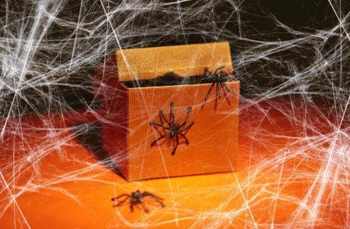 Invasion d'araignées dans les maisons? Des experts expliquent pourquoi elles sont si nombreuses
