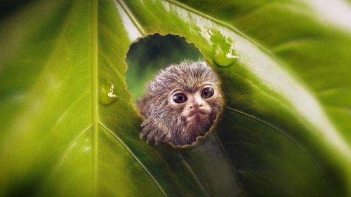 Cinq documentaires animaliers pour changer des dessins animés