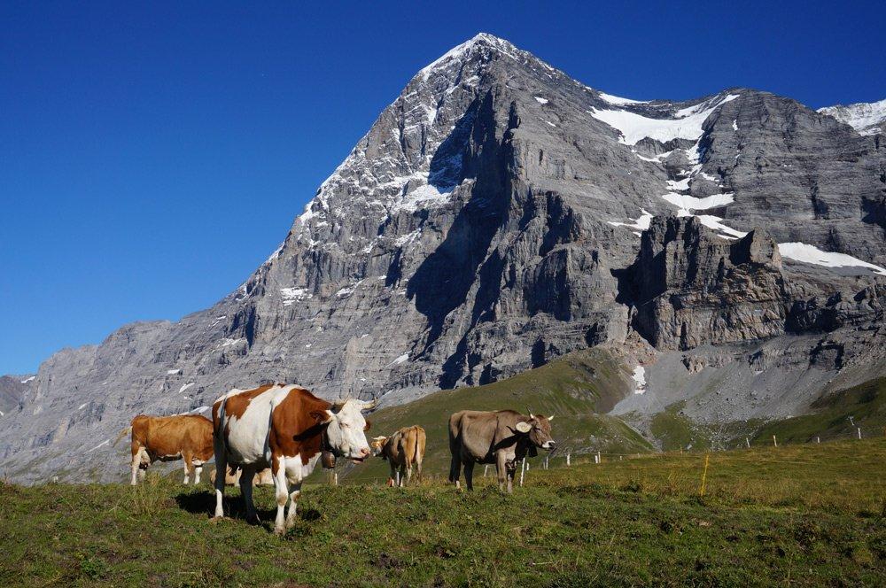 Wandern in der Schweiz - Tipps Hüttenwanderung im Berner Oberland