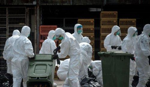En Chine, le premier cas humain de grippe aviaire H10N3 détecté