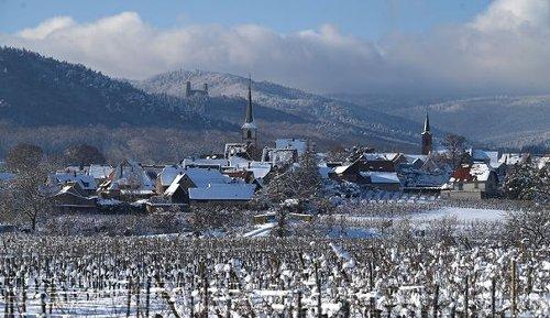 Gel: au moins 2 milliards d'euros de manque à gagner pour la viticulture (FNSEA)