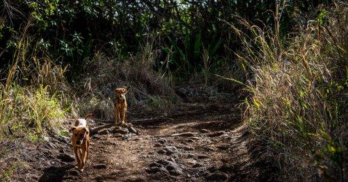 Polémique à la Réunion autour d'une étude sur les animaux errants confiée à la fondation Brigitte-Bardot