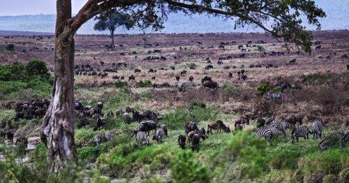 Seulement 3 % des écosystèmes mondiaux restent intacts