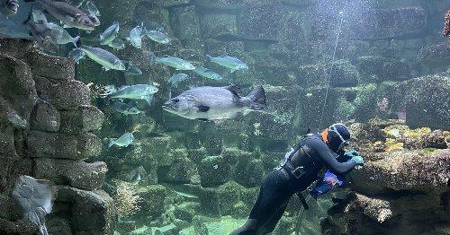 A La Rochelle, un aquarium au ralenti, des poissons en pleine forme