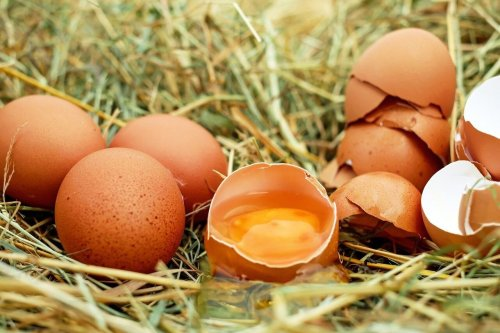 Huevo campero: el super alimento para vitaminarse y supermineralizarse