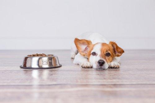 Hanföl für Hunde: Wirkung, Dosierung und die besten Öle