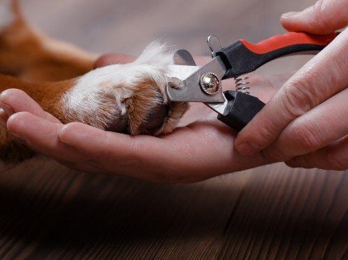 Krallen schneiden beim Hund: So geht's!