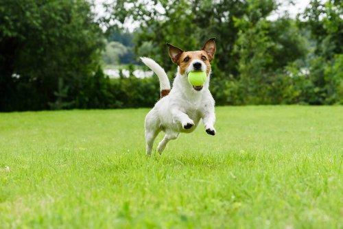 Die beste Ballwurfmaschine für Hunde
