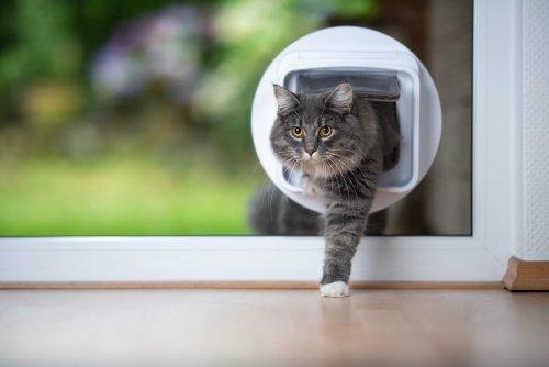 Katzenklappe mit Mikrochip: Das sind die besten Modelle