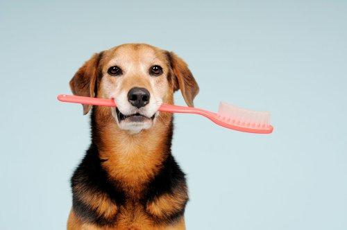 Zahnpflege beim Hund – so bleiben die Beißer gesund