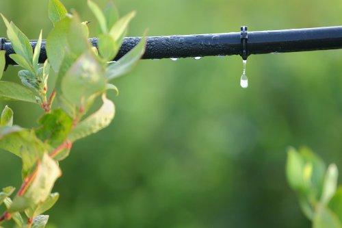 Ein Tropfschlauch ermöglicht eine gleichmäßige Bewässerung
