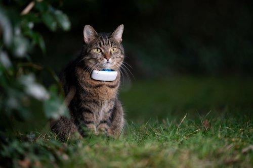 Sicherheit für Samtpfoten – ein GPS Tracker für Katzen
