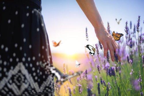 Insektenfreundlicher Garten: Das ist bei Gestaltung und Anbau wichtig