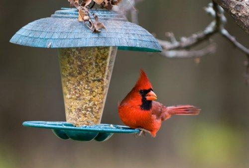 Die schönsten Vogelfutterspender für den Garten