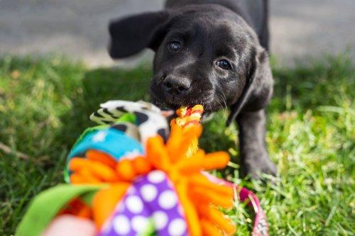 Interaktives Hundespielzeug: Tolle Spiele für Vierbeiner
