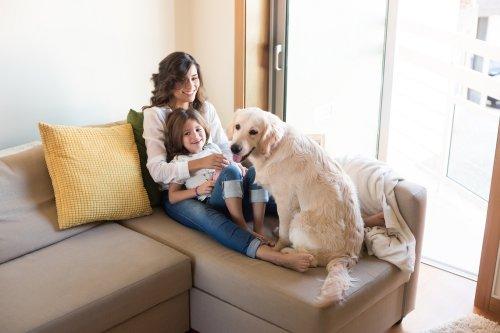 Dai tumori al diabete, come i cani ci salvano la vita - LifeGate
