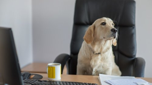 Why Having Dogs in the Office Is Good For You and for Them