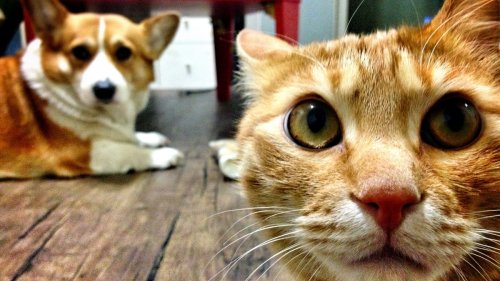 These Images Show You How Your Pets See the World