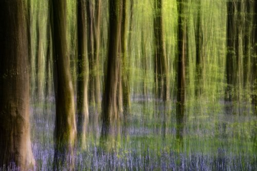 How To Use Intentional Camera Movement For Creative Photography