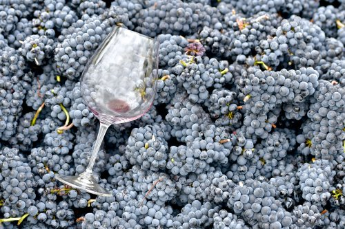 The 14 Best Pinot Noirs to Drink in 2021