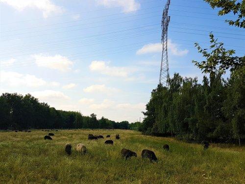 Urban Hiking – Grüne Hauptwege durch Berlin