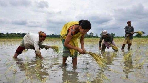 Amazon, Microsoft swoop in on $24 billion deposit of farm-data in India