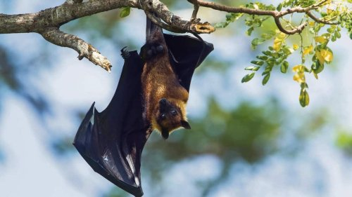 How bats keep the ecosystem safe and make our lives better