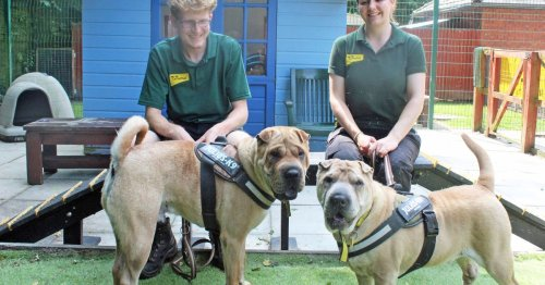 Best friends Teddy and Rocko need a new home together