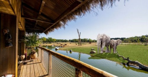 Stay in safari park where you can see elephants from your room